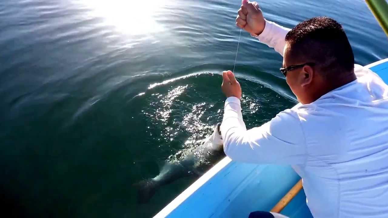 Lake skinner striped bass youtube for Lake skinner fishing report