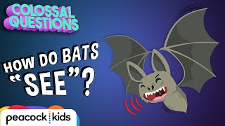 How Do Bats See if Theyre Blind? | COLOSSAL QUESTIONS