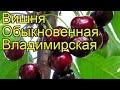Вишня обыкновенная Владимирская. Краткий обзор, описание характеристик, где купить саженцы