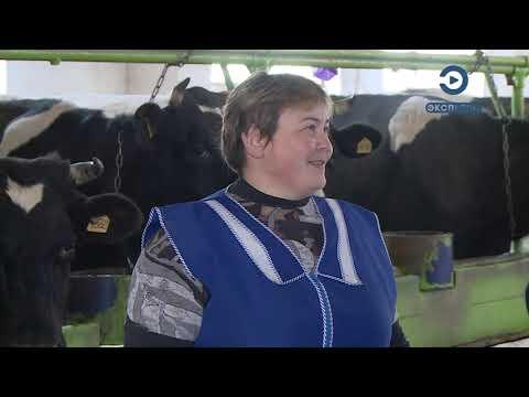 Лучшая доярка Пензенской области рассказала о своей работе