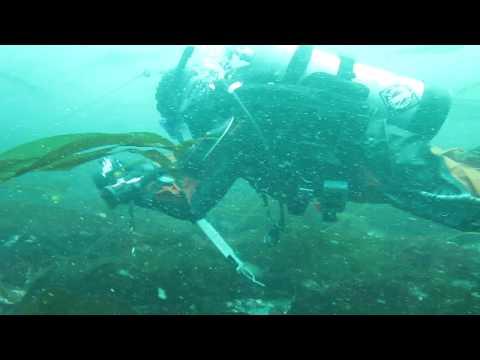 2011 Elwha River Benthic Survey in the Strait of Juan de Fuca RAW VIDEO F2Z 90 Degrees #20