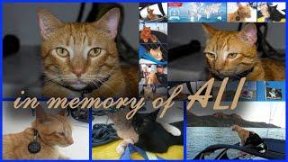 N MEMORY OF AL  A Crew Member Of The Yacht Hikari В ПАМЯТЬ О АЛИ члене экипажа яхты Hikari