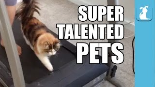 Super Talented Pets (Funny Compilation!)