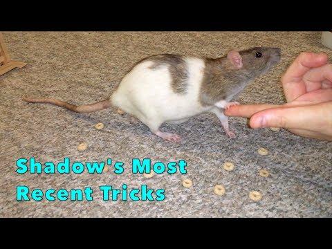Shadow's Most Recent Tricks - Last Filmed Clips