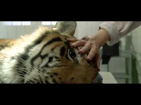 """""""Manhunter"""" (1986): Tiger Scene"""