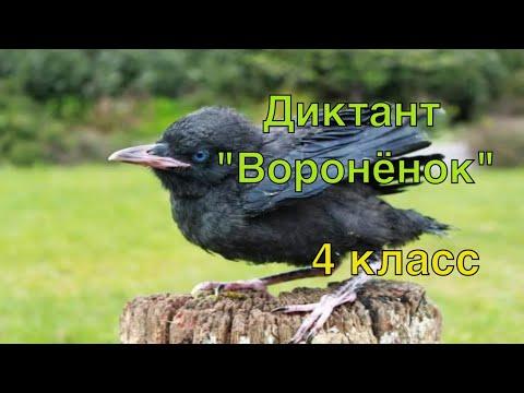 ВПР по русскому языку 4 класс. Диктант и 2 задания к диктанту. Вариант 2