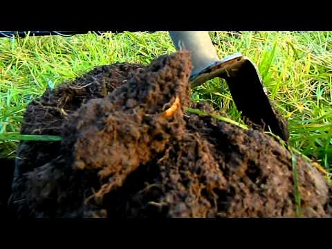 October produces Gold! - Metal Detecting in Scotland.