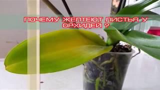видео Почему сильно желтеют листья у орхидеи
