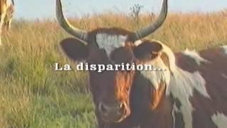Ferrandaise 1989 : un retour vers le futur