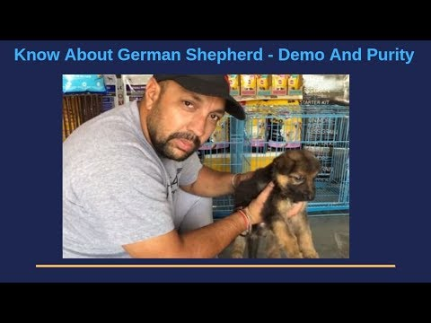 Pet Care - Know About German Shepherd - Demo And Purity - Bhola Shola