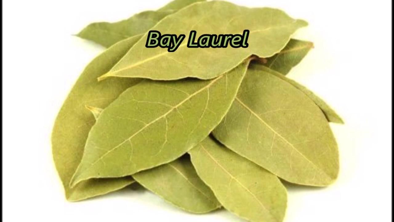 The Magickal properties of Bay leaves(Bay Laurel): Magickal herbs
