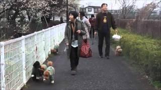 毎月第2日曜日の午前8時に東村山の空堀川天王橋集合で、犬といっしょに...