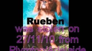 Help Find Rueben,stolen King Charles Cavalier (dog)- In Adelaide- $5000 Reward!