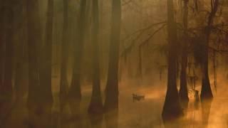 1 hour of Swamp Rock/ Swamp Blues/ Roots Rock