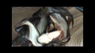 Fish Farming using Organic Waste......