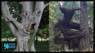 Pohon dari Neraka ? POHON PALING MENGERIKAN DI DUNIA YANG BAKAL BIKIN KALIAN LARI KETAKUTAN !