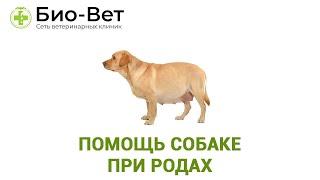 Как помочь собаке при родах. Ветеринарная клиника Био-Вет.