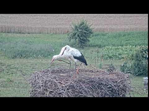 Live Camera Axis P5635-E-MkII
