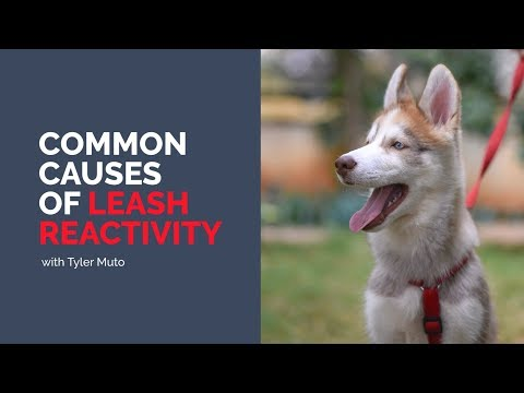 common-causes-of-leash-reactivity---tyler-muto