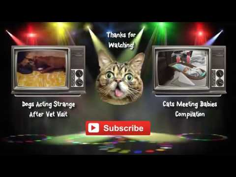 FUNNY CATS VIDEO   FUNNY CATS COMPILATIONS   VIDEO   Funny Animals Funny Pranks Funny Fails