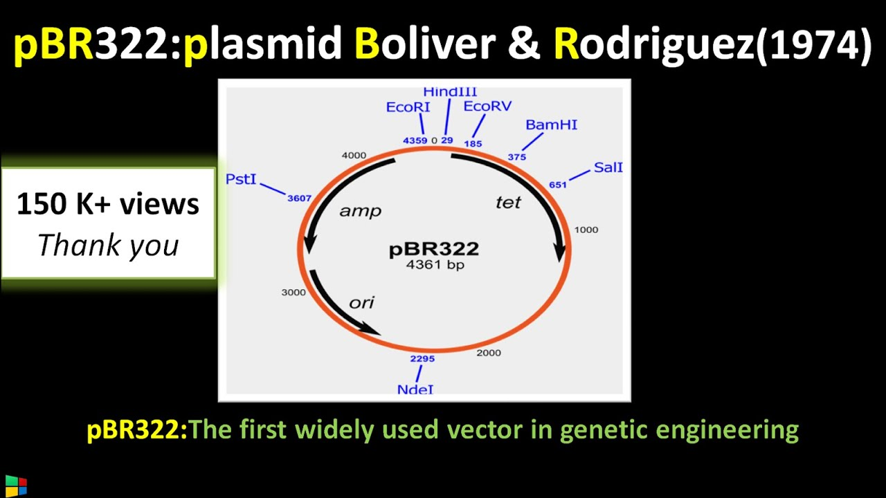 how to draw a restriction map of a plasmid