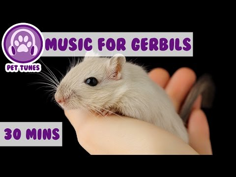 Relaxing Music for Your Gerbil!