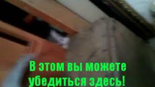 Продаются НЕДОРОГО Шотландские котята