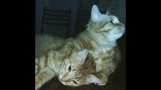 #Милые_рыжие_коты весело играют с коробкой.(Cute red cats)fun playing with the box.