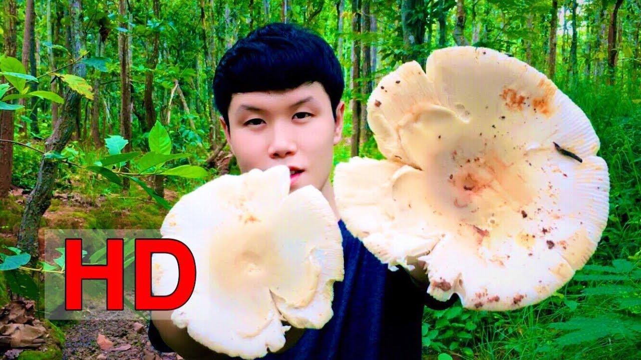 ใช้ชีวิตในป่ากับสราวุฒิ ปี 2 ตอน 1 (หาเห็ดตะไค/Russula Virescens Mushroom/如何找到野生蘑菇)