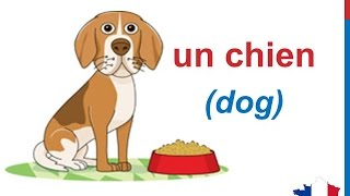 French Lesson 58 - ANIMALS in French Vocabulary LES ANIMAUX en français Animales en francés
