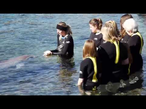 Swim with dolphins at SeaWorld's Discovery Cove theme park in Orlando, Florida