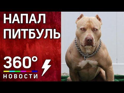 Бойцовский пес напал на беременную женщину в Петропавловск-Камчатском