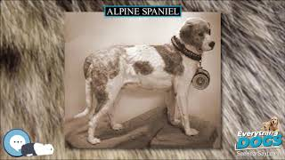 Alpine Spaniel  Everything Dog Breeds
