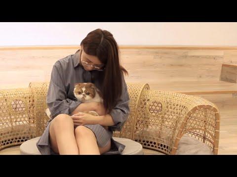 【小圈圈—人貓共生家具組】產品介紹