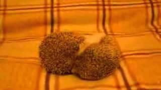 Ёжик порно/The Hedgehog porn