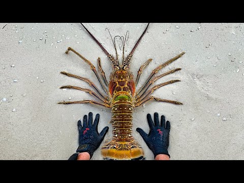 Found Giant Lobster While Spearfishing Remote Island! (Catch Clean Cook)