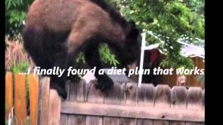 When Cute Animals Escape From Bad Fences