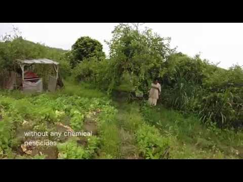My visit to CMC Organic Farm in Kundasan