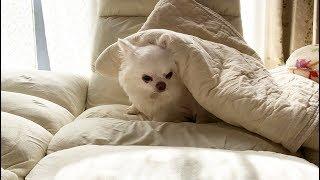 ツデレコハクさんが大切にしているのはリラックスしては寝る事 猫みたい...
