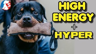 Hyper dog | How to calm them down