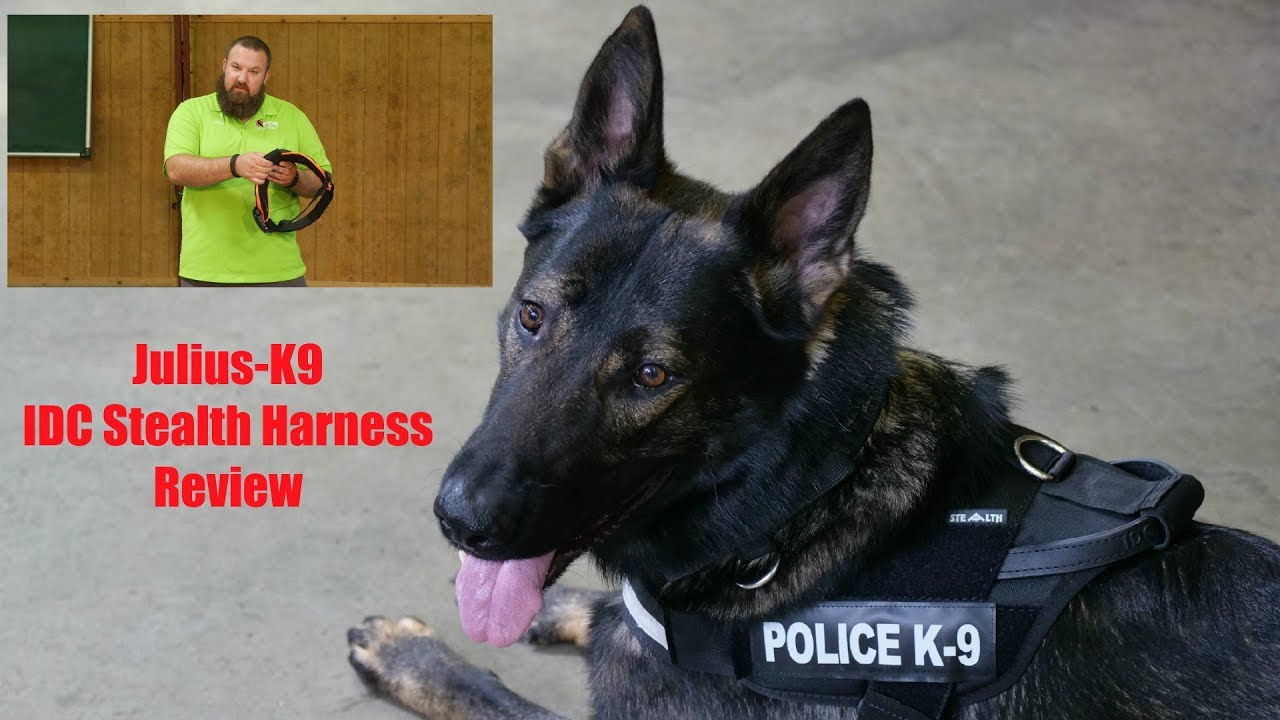 Julius K9 Idc Stealth Harness Review Youtube