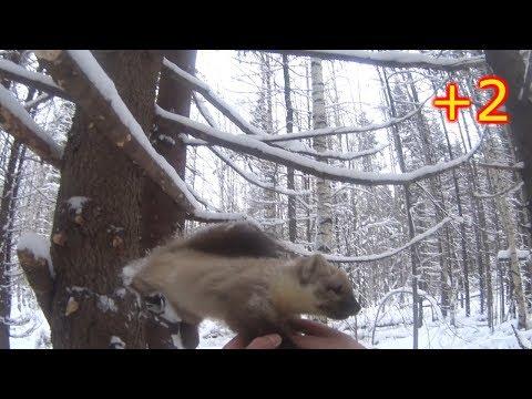 ОХОТА НА ЛОСЯ/ПРОВЕРКА
