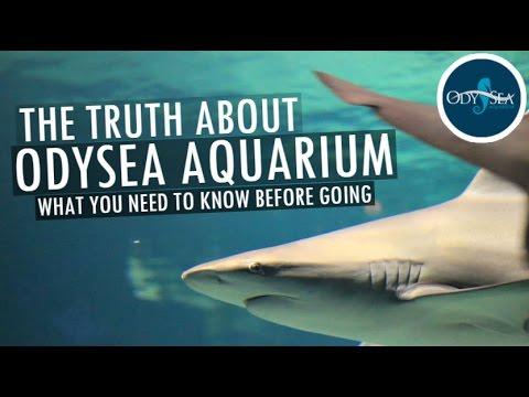 THE TRUTH ABOUT ODYSEA AQUARIUM  FULL TOUR IN HD