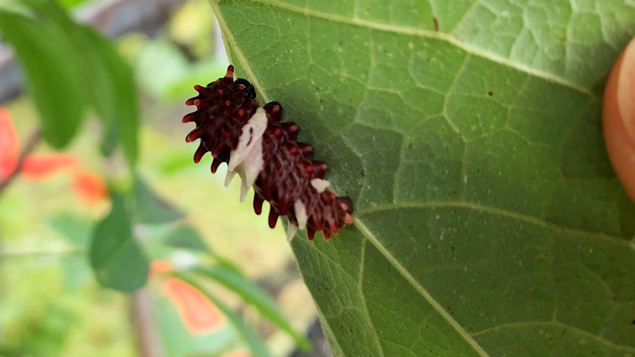 점점 사라지는 한국 곤충들을 번식하는 곳이 있습니다! 근데 진짜 신기하네ㄷㄷ