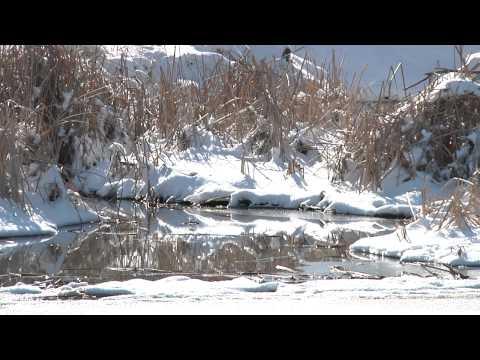 Naturalist Notebook - Texas Snow