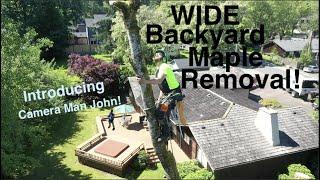 WIDE Backyard Maple Removal!