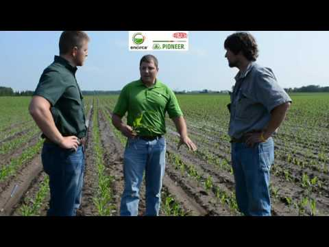 Pioneer® Growing Point® Agronomy: Corn Growth Stages and Herbicide Timing