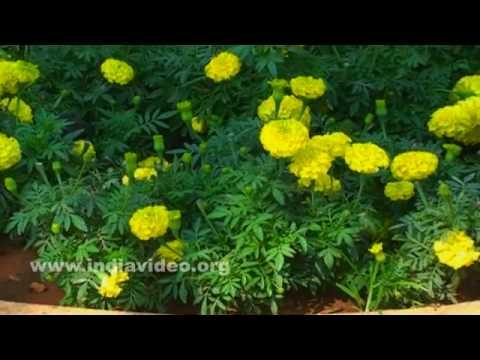 Lal Bagh Botanical Garden of Bangalore