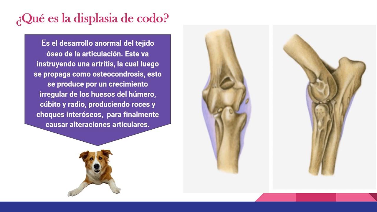 Anatomia, Displasia de Codo y Cadera en Caninos. - YouTube