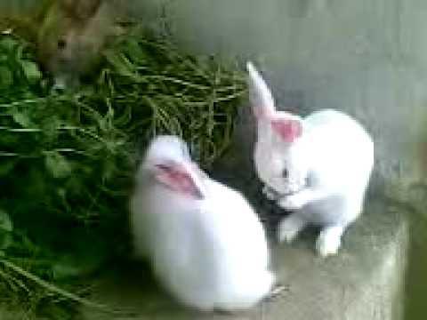 Kelinci Putih Lucu